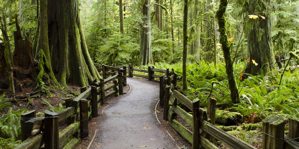 McMillan Provincial Park, Vancouver Island